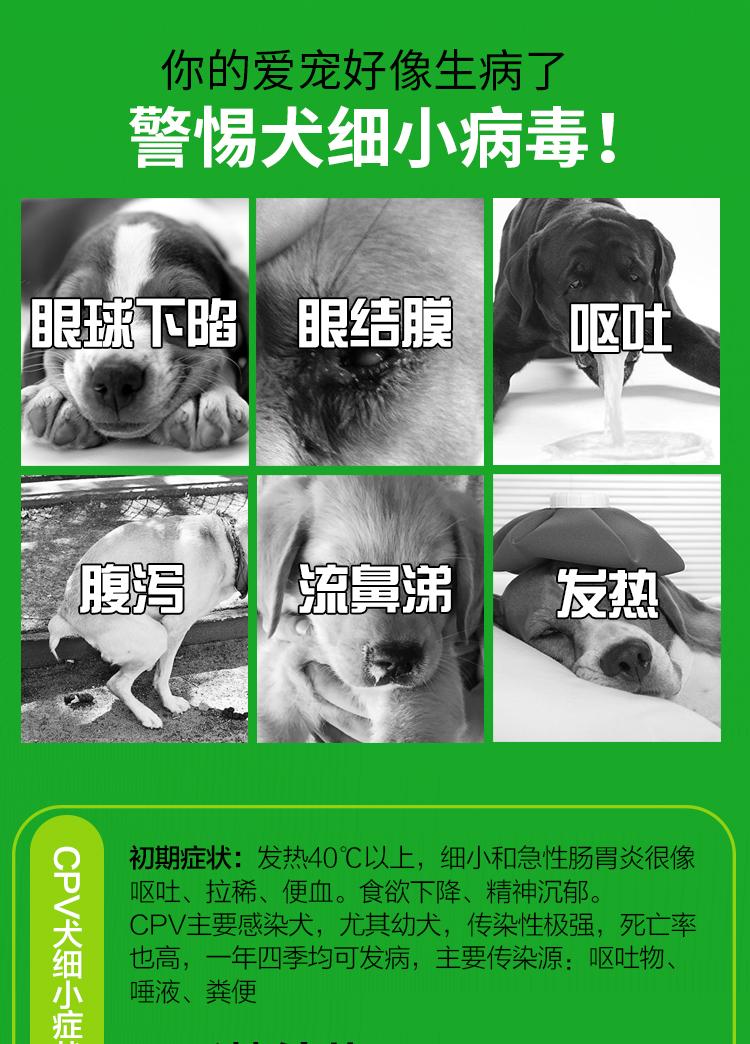犬細小試紙_04.jpg